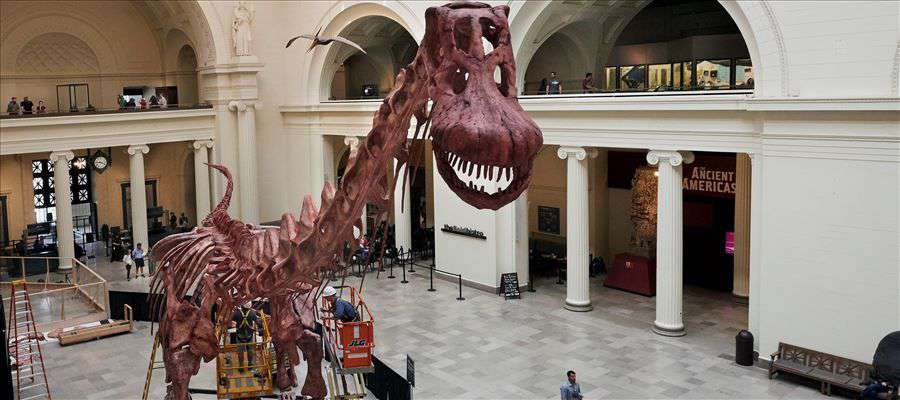 Worlds largest Dinosaur to be exhibited in Chicago Museum